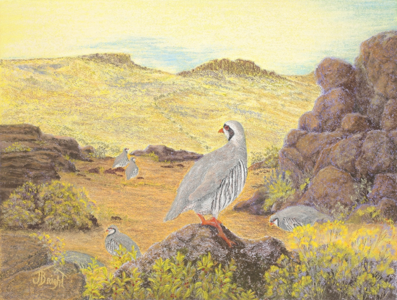 Chukar Country by Judi Bright