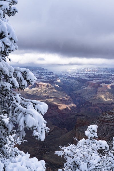 Christmas Portrait Grand Canyon by A O Tucker