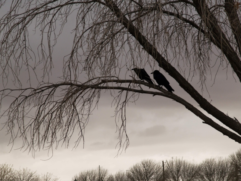 Still Life with Crows by Parker E.C. Bradley