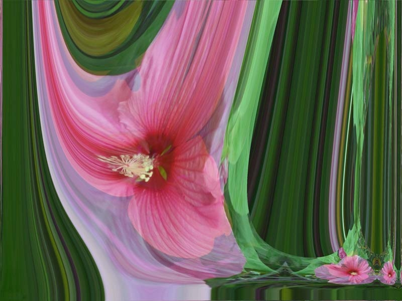Trilliated Hibiscus by Allen Hirsh