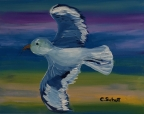 Quick Gull by Christina Schott