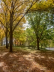 Fall Path by David Coblitz - The St. Louis Artographer