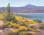 Sonoran Poppies by Lucy Dickens