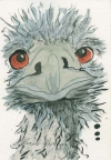 Baby Emu by Pamela Morgan