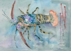 Spiny Lobster by Pamela Morgan