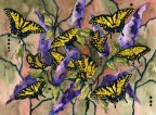 Tiger Swallowtails by Pamela Morgan
