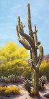 Sonoran Giant by Lucy Dickens