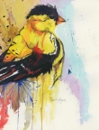 Goldfinch by Pamela Morgan