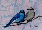 Bluebird Couple by Nancy Calcutt