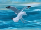 Seagull by Christina Schott