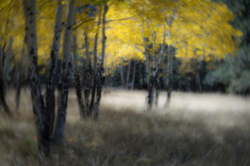 Fall Impressions by A O Tucker