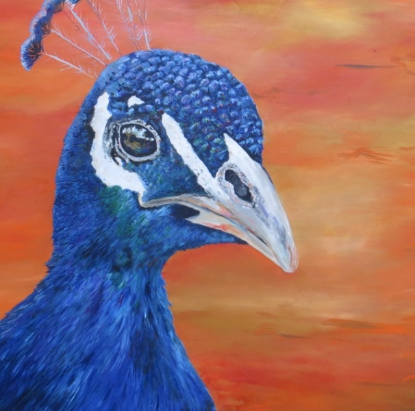 Pavo by Deana Hoover