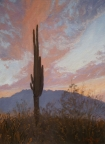 Saguaro Sunset by John Horejs