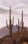 Saguaros at Dusk by John Horejs