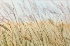 Field Breeze by Linda Snouffer,Botanical Printmaker