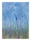 Knee High by Linda Snouffer,Botanical Printmaker