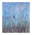 Through the Seeded Meadow by Linda Snouffer,Botanical Printmaker