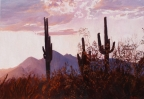 Saguaro Ridge Sunset by John Horejs