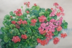 Penny's Geraniums by Joan Metcalf