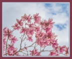 Magnolia Sky by David Coblitz - The St. Louis Artographer