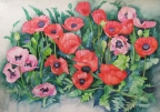 Poppies by Joan Metcalf