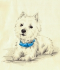 West Highland Terrier by Cristal Baldwin